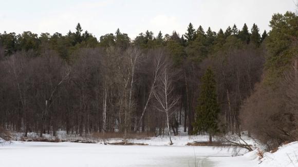 Минобороны пересмотрит границы запретных лесов