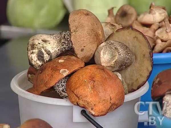 Сезон сбора грибов: какие документы должны быть у продавца, чтобы покупатель был уверен в качестве продукта?