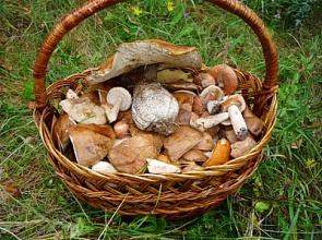 МЧС напоминает правила сбора грибов