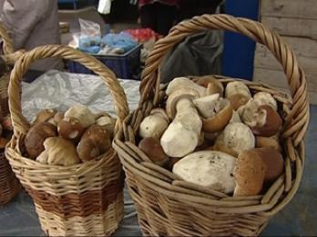 На костромских прилавках появились белые грибы