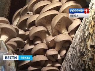 Лунинские грибоводы планируют получать в год около 600 тонн вешенок