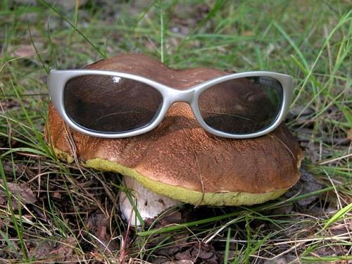 Блогеры идут по грибы