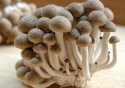 Папилломавирус уничтожат японские грибы
