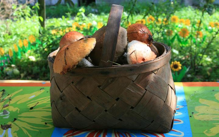 Отправляясь за грибами, могли прибегнуть к небольшому суеверному прогнозу – погадать при помощи корзины.