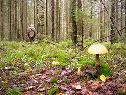 Сотовый телефон помог пожилым грибникам выбраться из леса