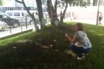 Прохожие, замечая грибы на газонах, останавливаются, чтобы сфотографировать их. Автор фото: Светлана Жбанова