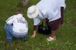 Сбор грибов, не отходя от дома. Автор фото: Александр Петров