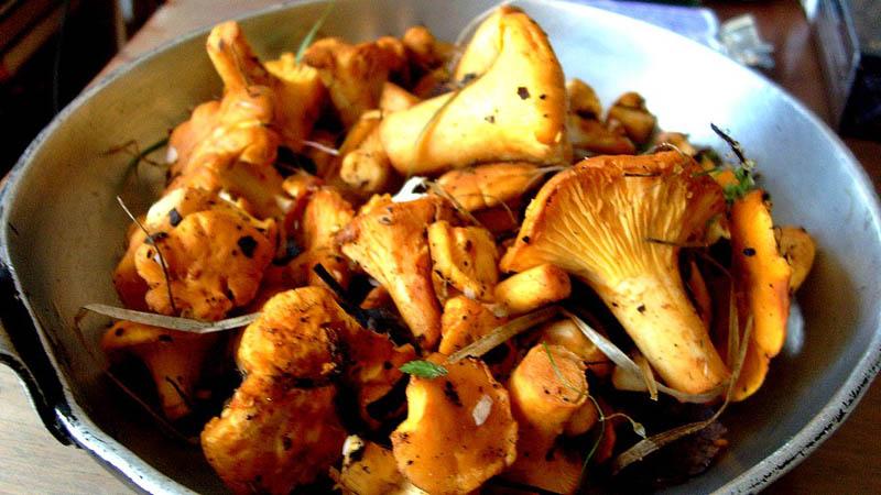 Лисички в сковородке: жарить можно сразу