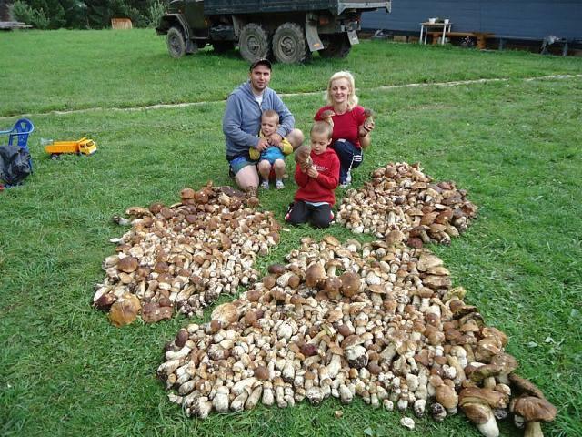 Тернопольская семья собрала 112-килограммовый урожай грибов