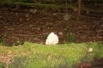 Тихая охота 01.09.2012