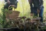 Собирать грибы поможет смартфон