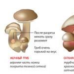 Как отличить ложные грибы двойники от съедобных