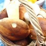 В Нижегородской области появились грибы