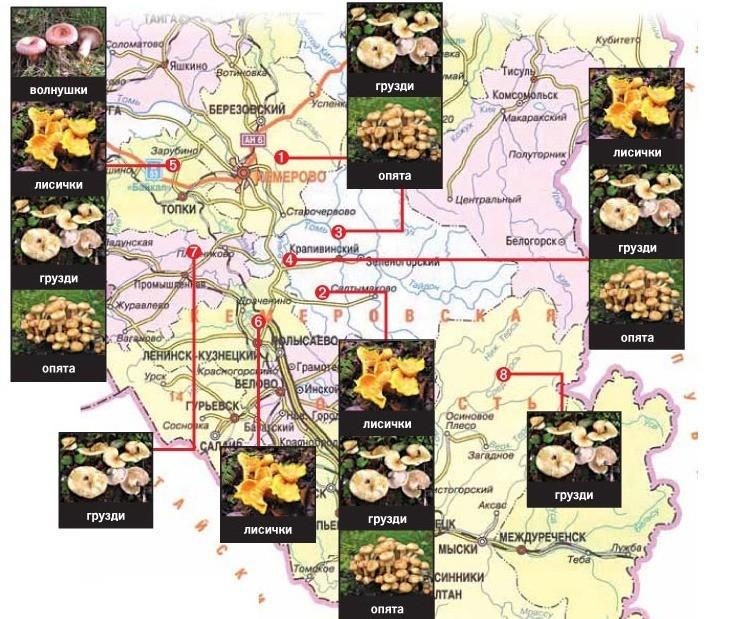 Самые грибные места Кузбасса