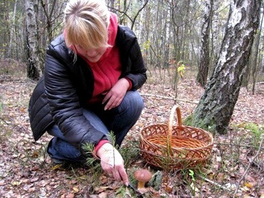 Сбор грибов и грибная погода