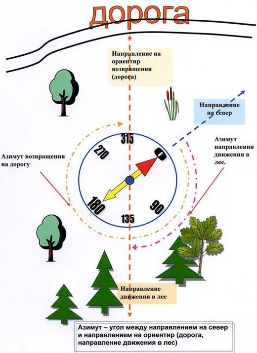 Бродя по лесу, важно обращать внимание не только на грибы, но и на детали, которые помогут вернуться домой