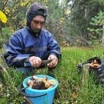 Воронежским опятам, сыроежкам и рыжикам присвоили статус «особо опасны»