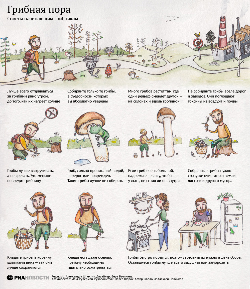 Анимации спасибки, правила сбора грибов в картинках