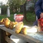 Рынки Калининграда завалены местными грибами