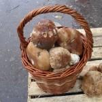 В Костроме открылся грибной сезон, но цены не радуют