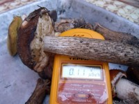 Россельхознадзор обнаружил на рынках Москвы и Московской области большое количество зараженных радиацией грибов и ягод, привезенных из Карелии.