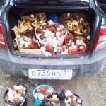 Фотофакт: сыктывкарец собрал грибы на 6 тысяч рублей