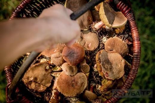 В связи с засушливой погодой и отсутствием в лесу грибов открытый чемпионат по грибной охоте перенесли на 18 октября.