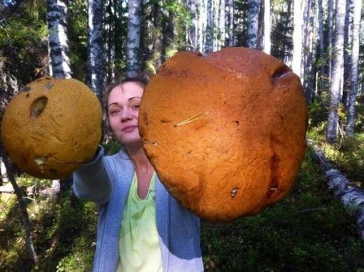 """Фотография огромного подосиновика, найденного в Медвежьегорском районе Карелии, появилась в одной из групп """"ВКонтакте"""". Красиво."""