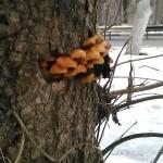 Из-за январской оттепели в Подмосковье вылезли грибы