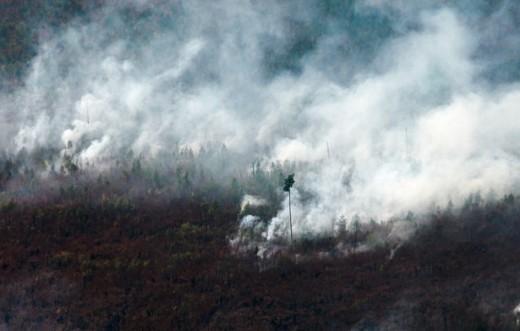 Во всех районах Витебской области продолжает действовать запрет на посещение лесов. Связано это со сложившимися погодными условиями, высоким классом пожарной опасности и отсутствием достаточного количества осадков.