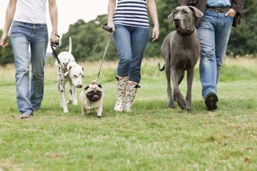 """Уважаемые грибники, примите участие в нашем опросе: """"Где вы гуляете с собакой?"""" Обращаем Ваше внимание, что при выборе ответов возможен множественный выбор."""