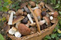 Лес уже поманил первыми грибами и ягодами. Но нельзя забывать, что лесные дары самые сильные накопители радионуклидов