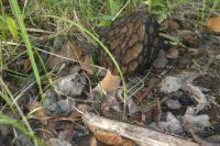 В Мурманской области можно встретить первые грибы