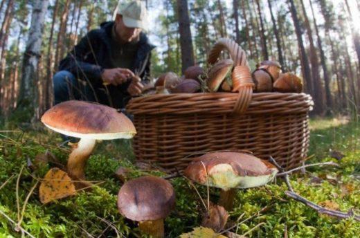 Прохладная и дождливая погода, случившаяся в области в начале июня, не нравится никому, кроме грибников.