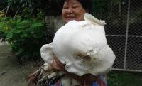 Фото дня: Самый большой гриб сезона