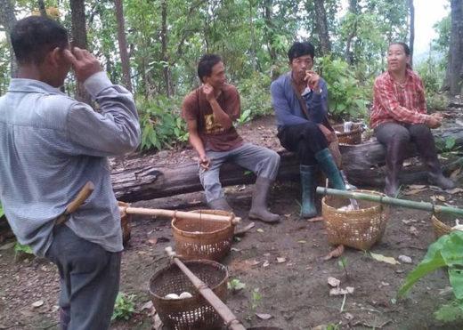 Благодаря обильным дождям на прошлой неделе, многие редкие породы съедобных грибов появились в лесах Чанг Мая, давая возможность местным жителям попробовать необычные грибы и продавать их на рынке