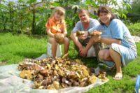 В високосный год собирать грибы нельзя