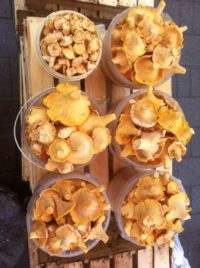 Сколько стоят грибы на тульских рынках