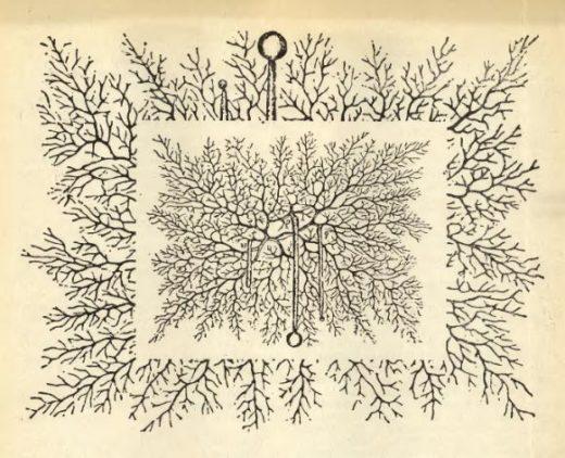 Грибы можно встретить повсюду: в почве, воде, воздухе, на растениях, в организмах животных.