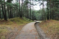 Сезон открыт: в латвийских лесах появились первые грибы. Можно ли их есть?