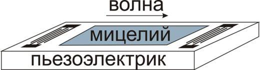 © ИРЭ РАН. Принцип работы электроакустического датчика на основе мицелия.