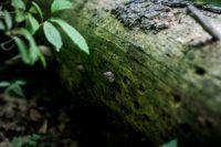 В Печерском лесопарке Могилева обнаружили краснокнижный гриб