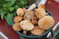 В Карталинском районе начался грибной сезон