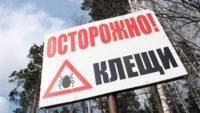 В России снизилось заболевание клещевым энцефалитом