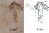 В Бразилии найден самый древний гриб