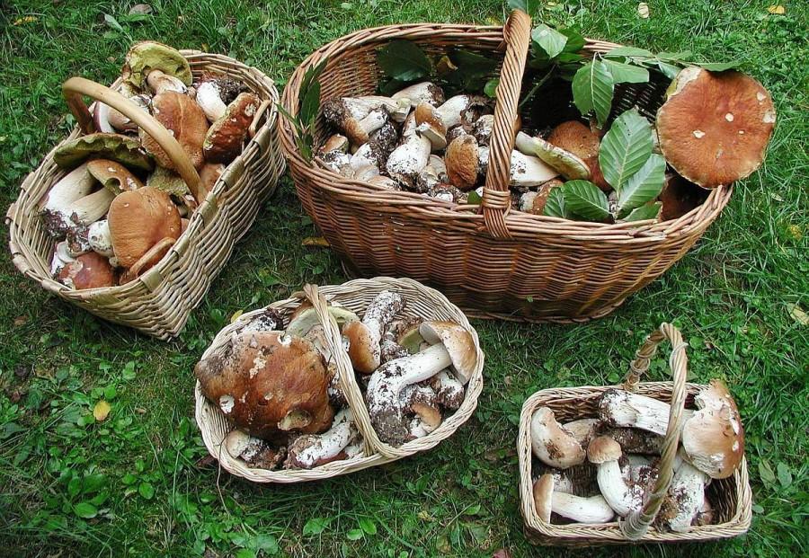 фото грибов в интернете фотостудий