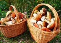 Сухая погода угрожает сорвать грибной сезон в Чехии