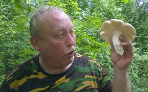 Прошедшие в Подворонежье грозовые ливни и жаркая погода сказались на росте грибов
