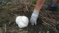 Огромный гриб вырос во дворе у жителя Башкирии