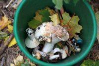 Как правильно собирать грибы, готовить и есть их без угрозы для здоровья